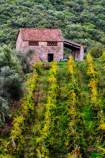 Up the vineyard to the old house...  San Gusmè, Chianti, Toscana