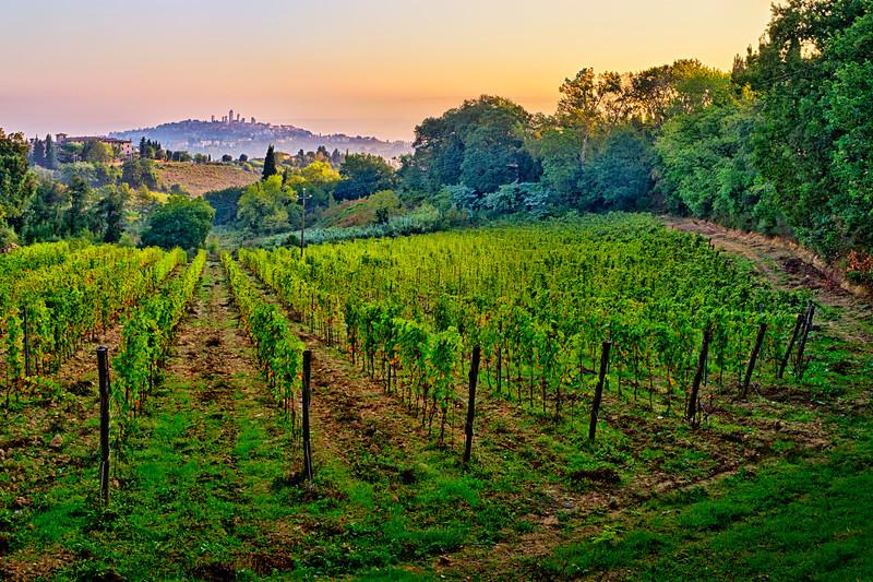 Vineyard Morning...