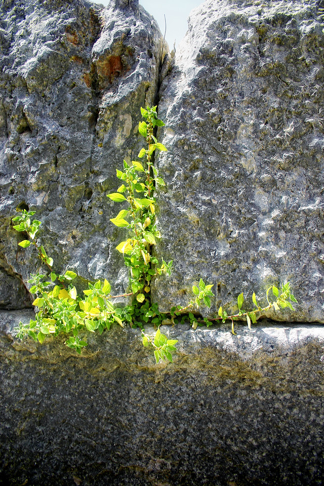 Life springs green from the stone blocks of the Theatre..