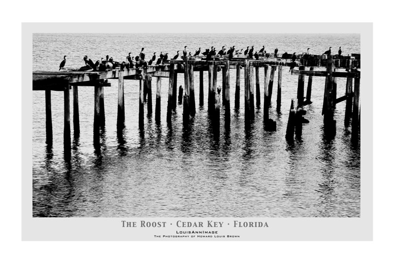 """Contri Date: March 31, 2011 - Cormorants and Pelicans roost on abandoned pilings off Dock Street. Cedar Key, Florida.  Visit our Cedar Key Gallery at:  <a href=""""http://www.louisannimage.com/Travel/Our-America/Cedar-Key-Old-Floridas-Big/"""">http://www.louisannimage.com/Travel/Our-America/Cedar-Key-Old-Floridas-Big/</a><br /> Thanks,  HB"""