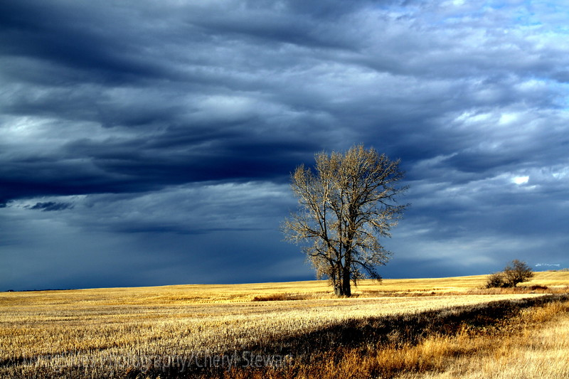 Land of Living Skies,  lone tree in storm clouds, late afternoon in rural sask