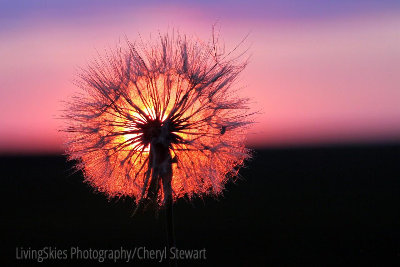 Sunset in the Saskatchewan prairie