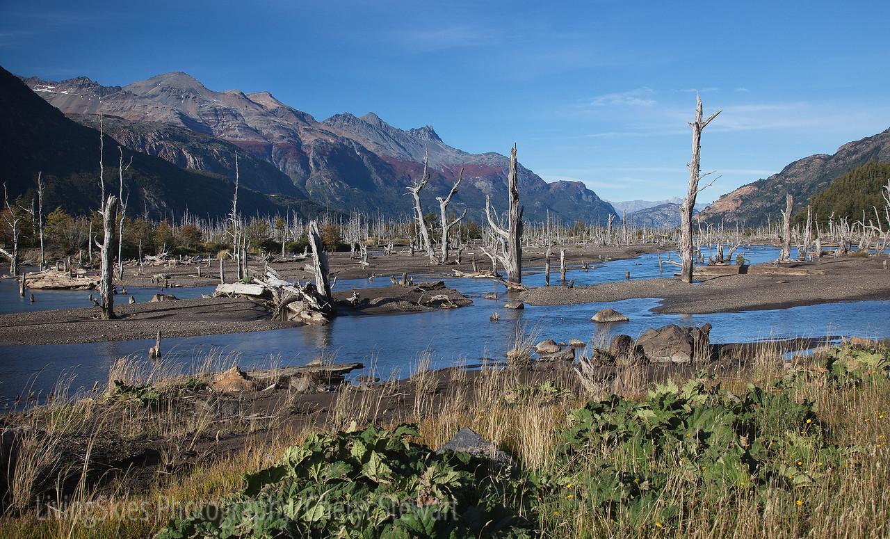 tree graveyard, Patagonia