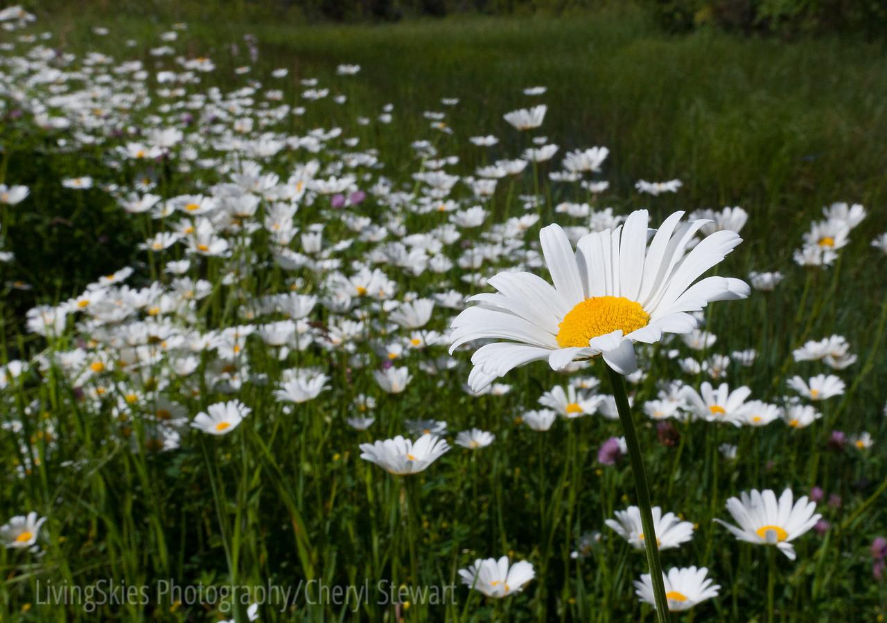 Ditch flowers, Madge Lake Sask