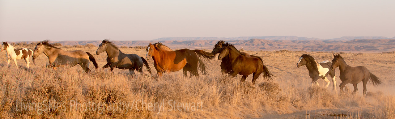 Wild horses, McCulloch Peaks Wyoming