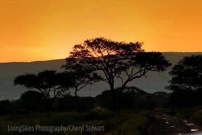 Sunset and acacia tree