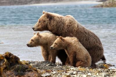 "Katmai Coastal bears,  ""what's that mom?"""
