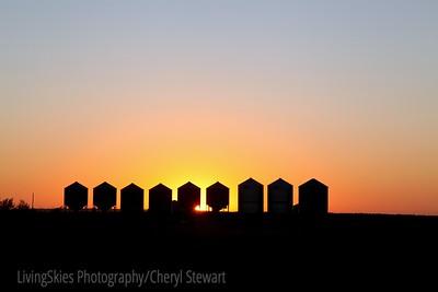 Graineries at sunset, rural saskatchewan