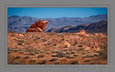 Rockin' the Desert