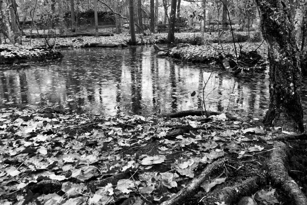 Water and Roots / Вода и корни