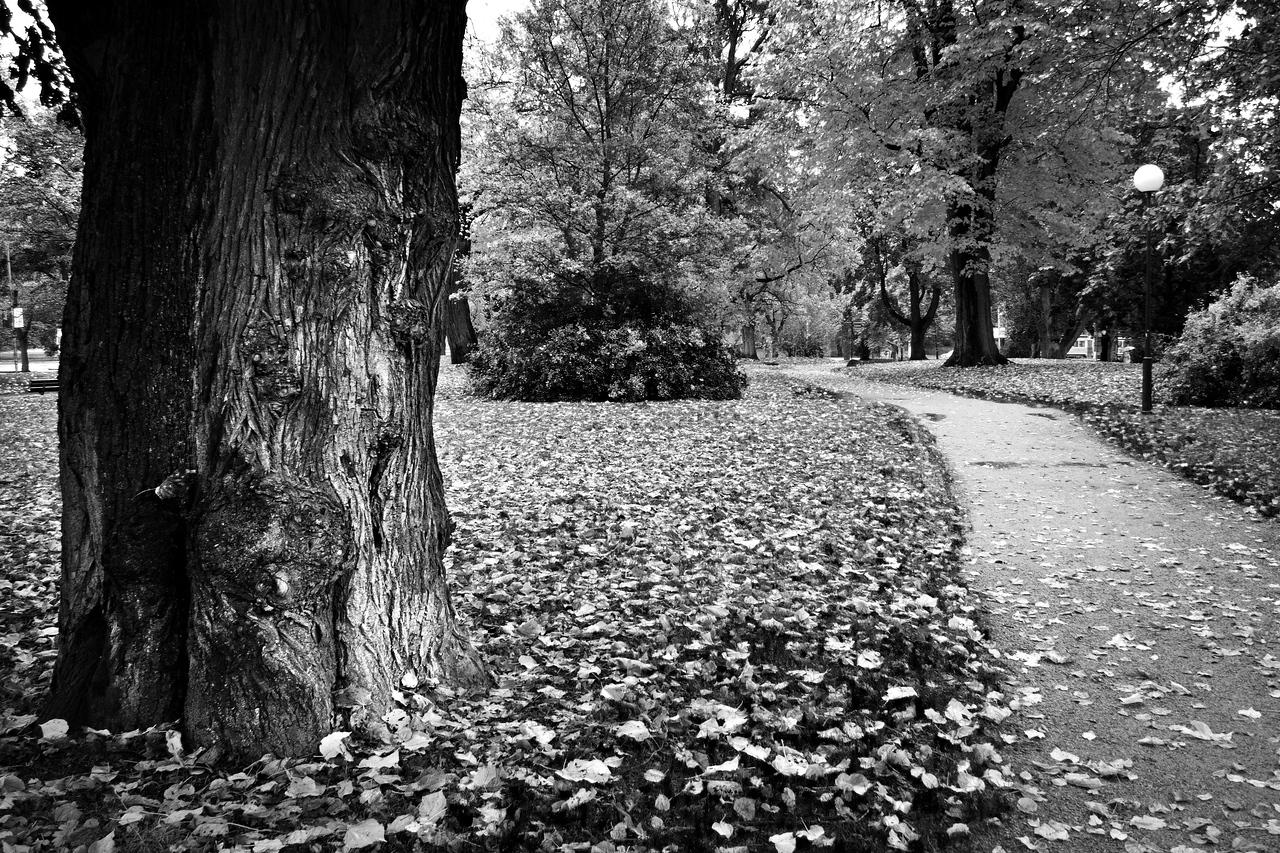 Autumn in Park / Осень в парке