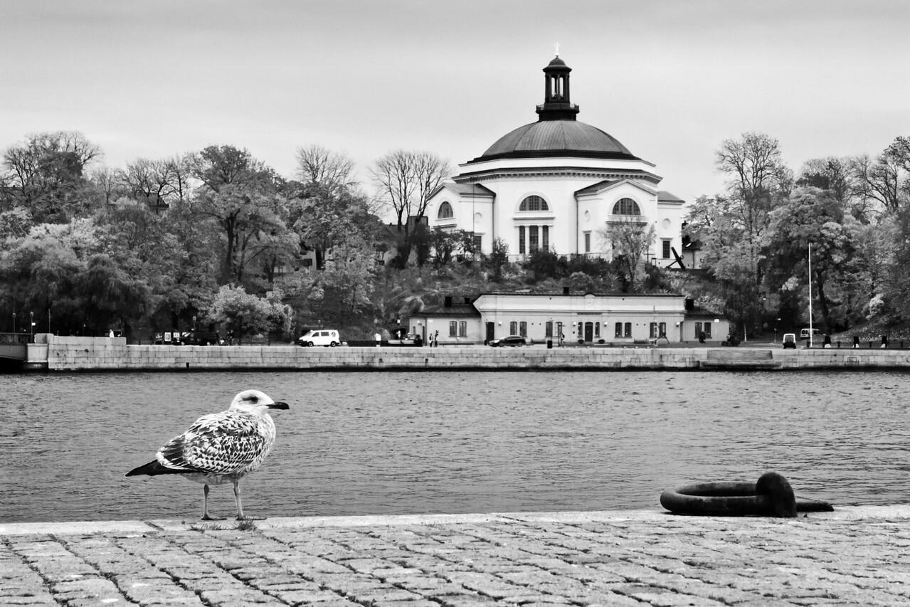 Bird and Water / Птица и вода