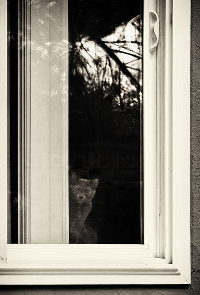 Ash at Door