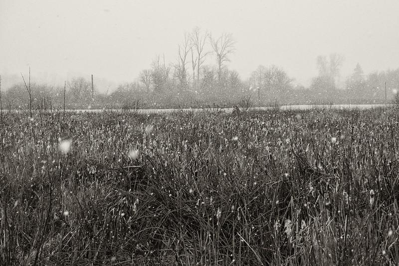 Fernhill Wetlands Snow