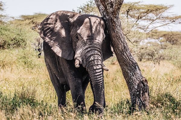 Africa-9