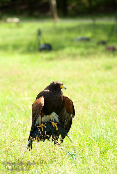 Portfolio Birds