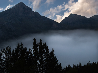 Fog / Niebla