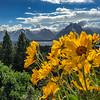 Wildflower Mountain