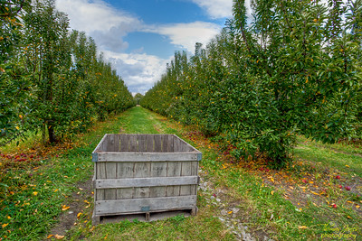 Tuttle Orchard; Greenfield, IN