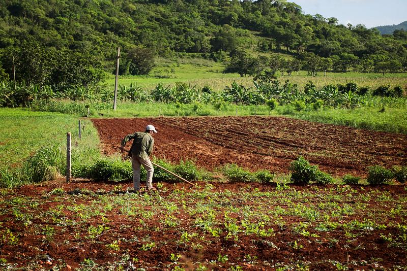 Ручной труд при возделывании посевов на Кубе очень распространен