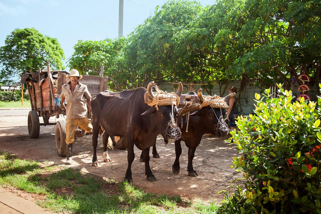 Роготые помощники фермера