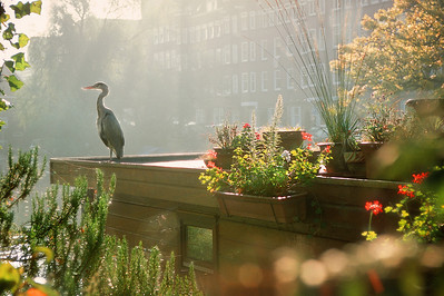 Bird at a houseboat. Amsterdam, the Netherlands