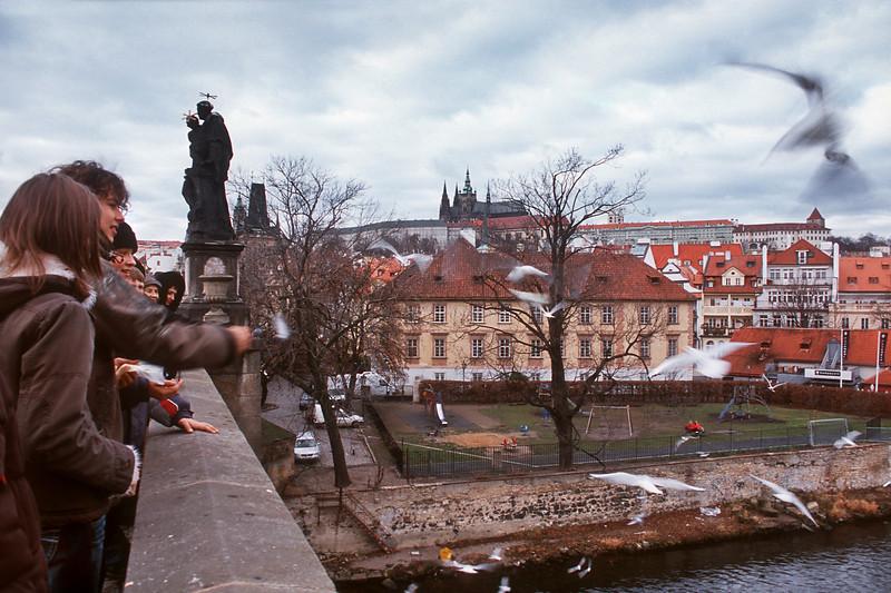 - Чайки над Карловым мостом в Праге<br /> - Seagulls over Charles Bridge in Prague