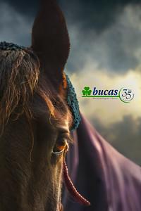 Bucas Paarden Commerciële Fotografie