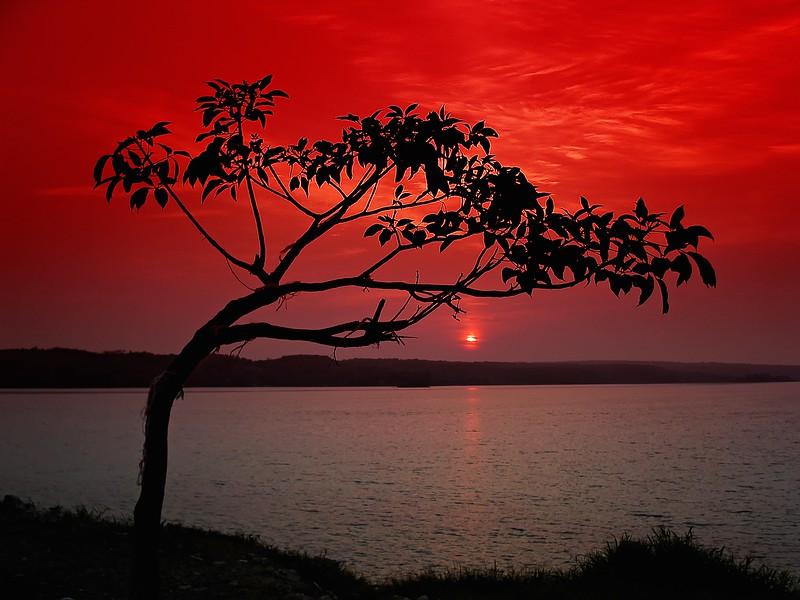 SunriseFlores