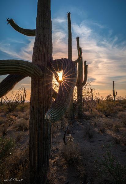 Saguaro Spectacular