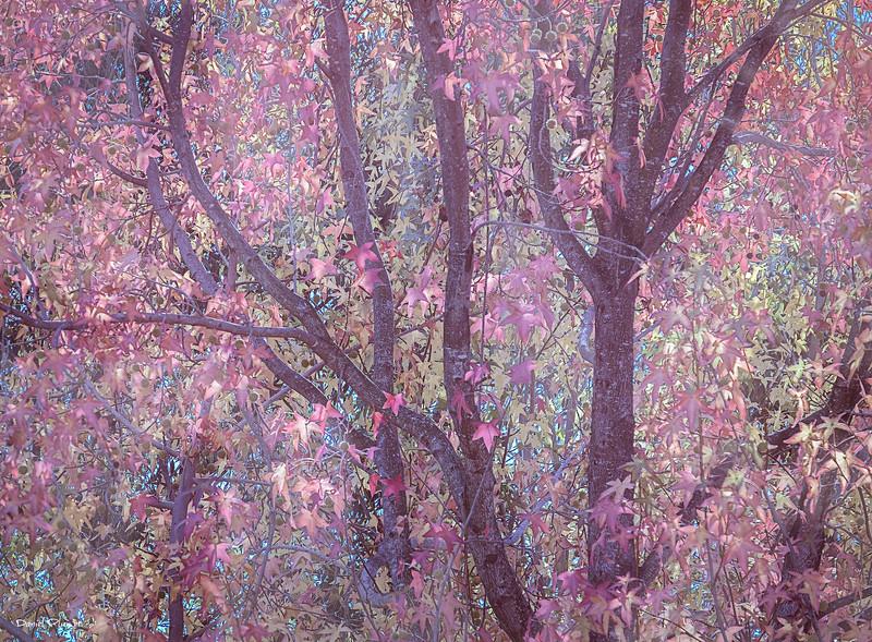 Pink Forrest