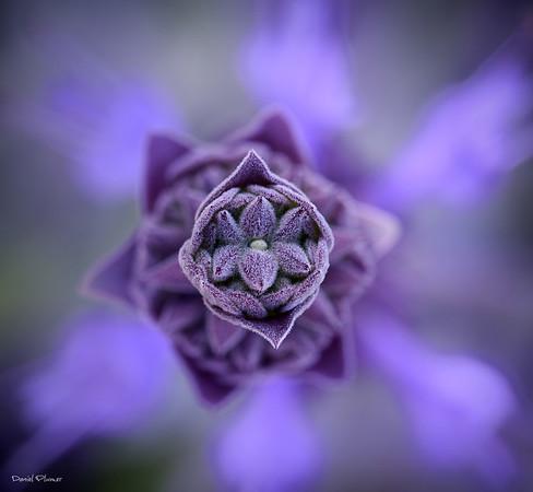 Natures Jewish Star