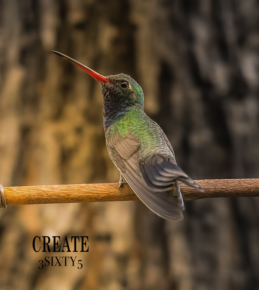 Photo #89/365 - Broad-Billed Hummingbird!