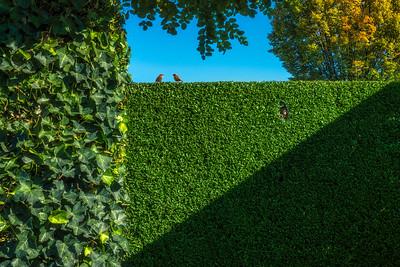 Garden of Mondriaan