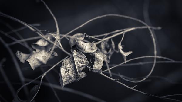 Dead leaves in Bracken
