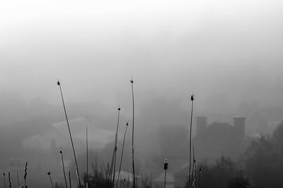 Carcoar In Mist #1