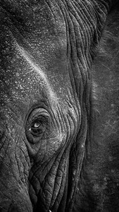 Elephants Eye, Kazinga Channel