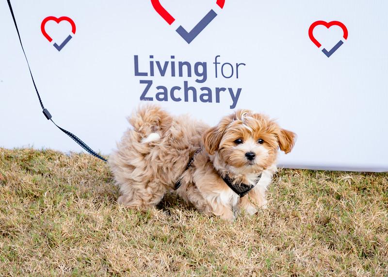 Living for Zachary Heartbeats Run 2017-228-7
