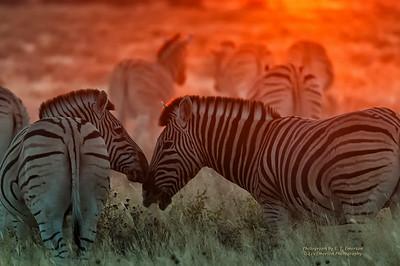 Etosha National Park Big Game