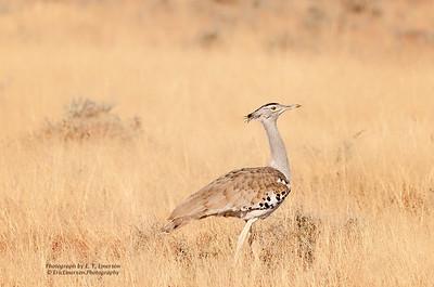 Etosha National Park Bird Life