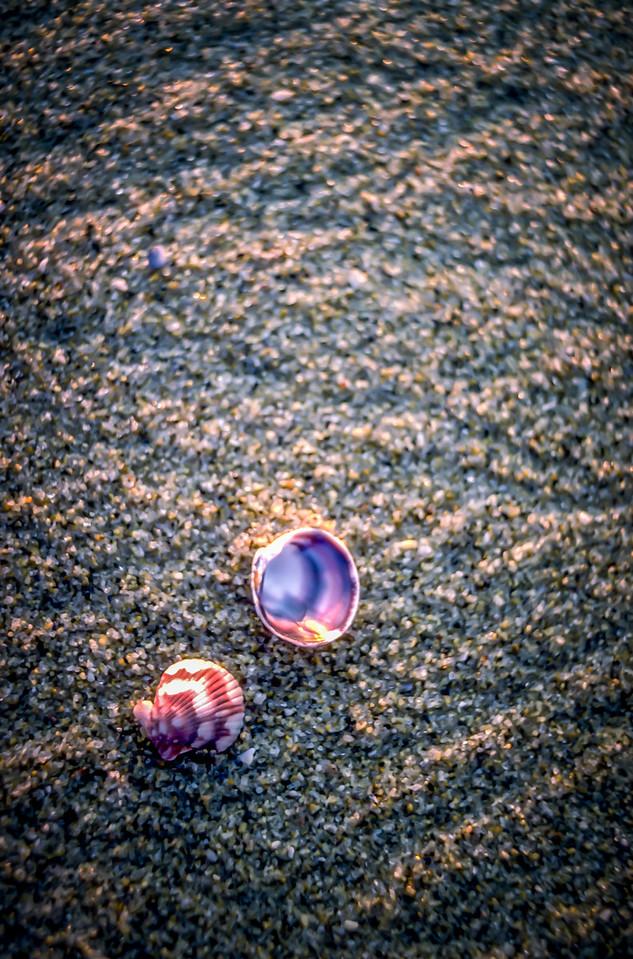 Shells of the Beach, Sea of Cortez