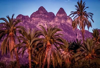 Zopilotes in the Palms at Juncalito, Sierra de la Giganta, Mexico