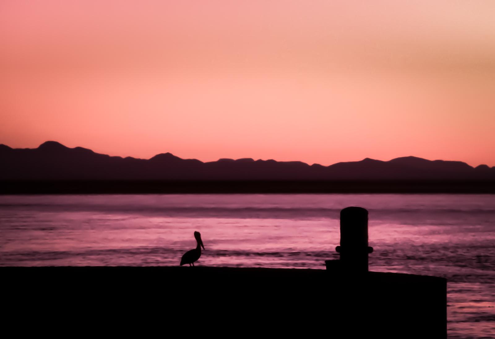 Pelican at Sunset, Puerto Escondido, Sea of Cortez, Mexico