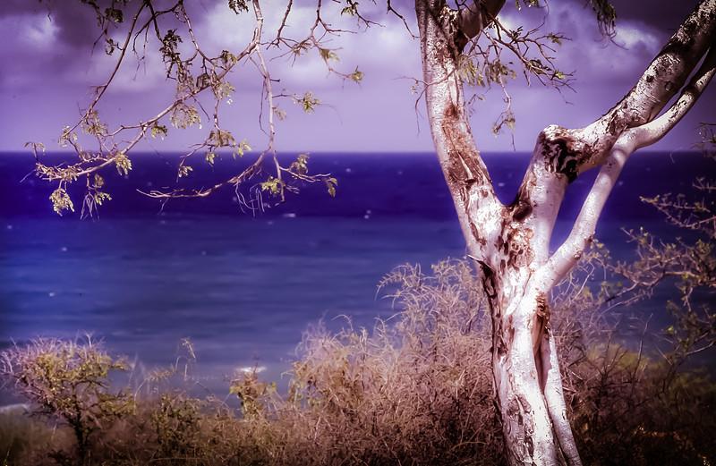 Palo Blanco against the Sea of Cortez, Baja California Sur, Mexico