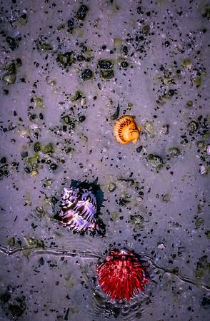 Coloful Shells- Sea of Cortez, Baja California Sur, Mexico