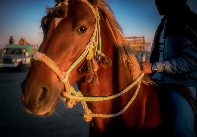 Horse Races near Guerrero Negro, Baja California Sur, Mexico