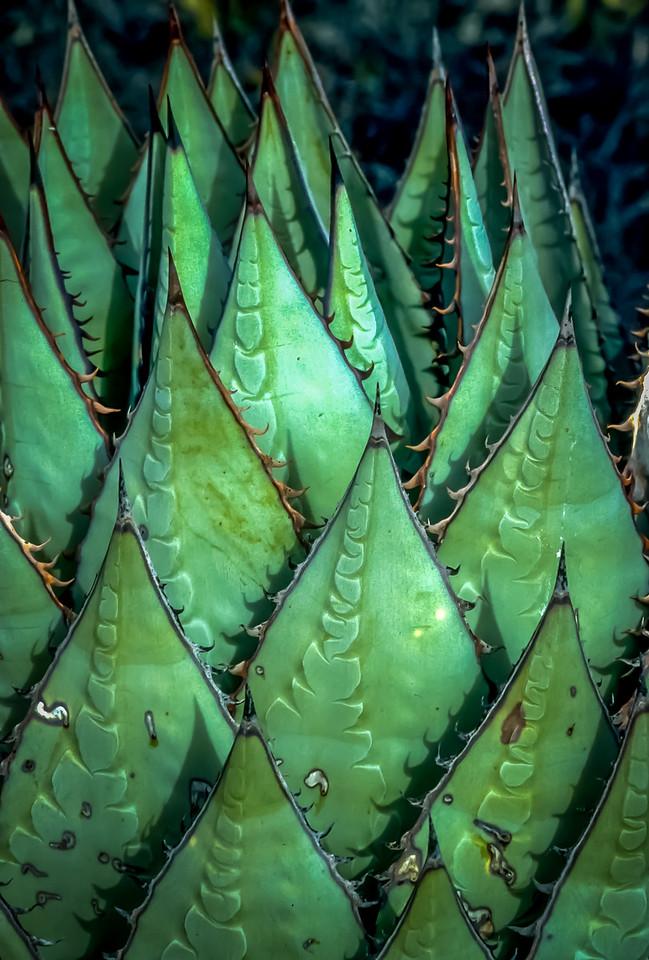 Cactus Detail, Cataviña, Baja California