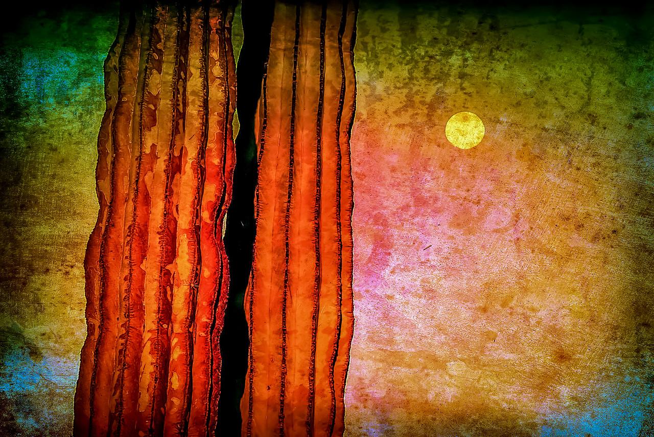 Cardon in the Moonlight