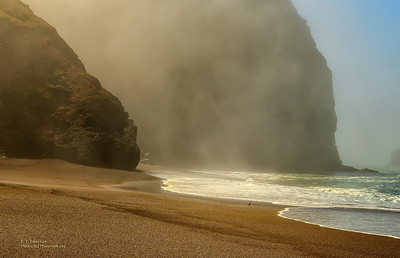 Misty Tennessee Cove Beach