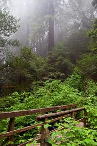 Misty Mt. Tam Morning